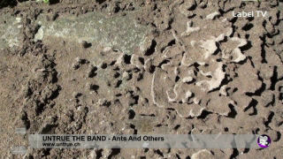 Untrue The Band - Ants And Others